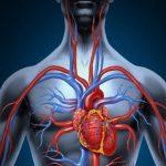 Come migliorare circolazione sanguigna