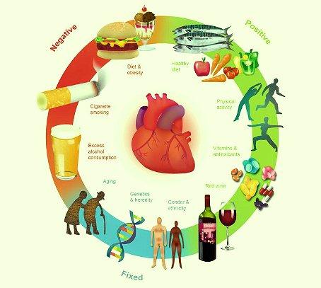 Risultati immagini per fattori rischio cardiovascolare