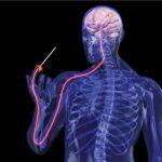 Come rafforzare sistema nervoso
