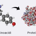 A cosa servono le proteine?