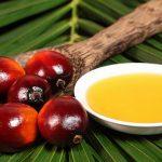 L'olio di palma fa male o no?
